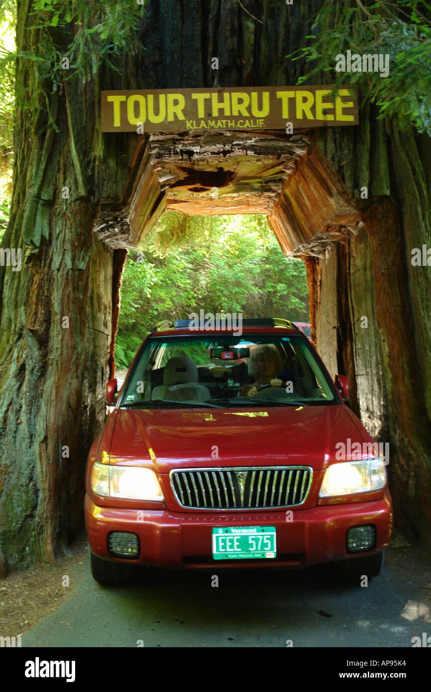 AJD51316, Klamath, CA, California, Tour Thru Tree, Redwood, car - Stock Image