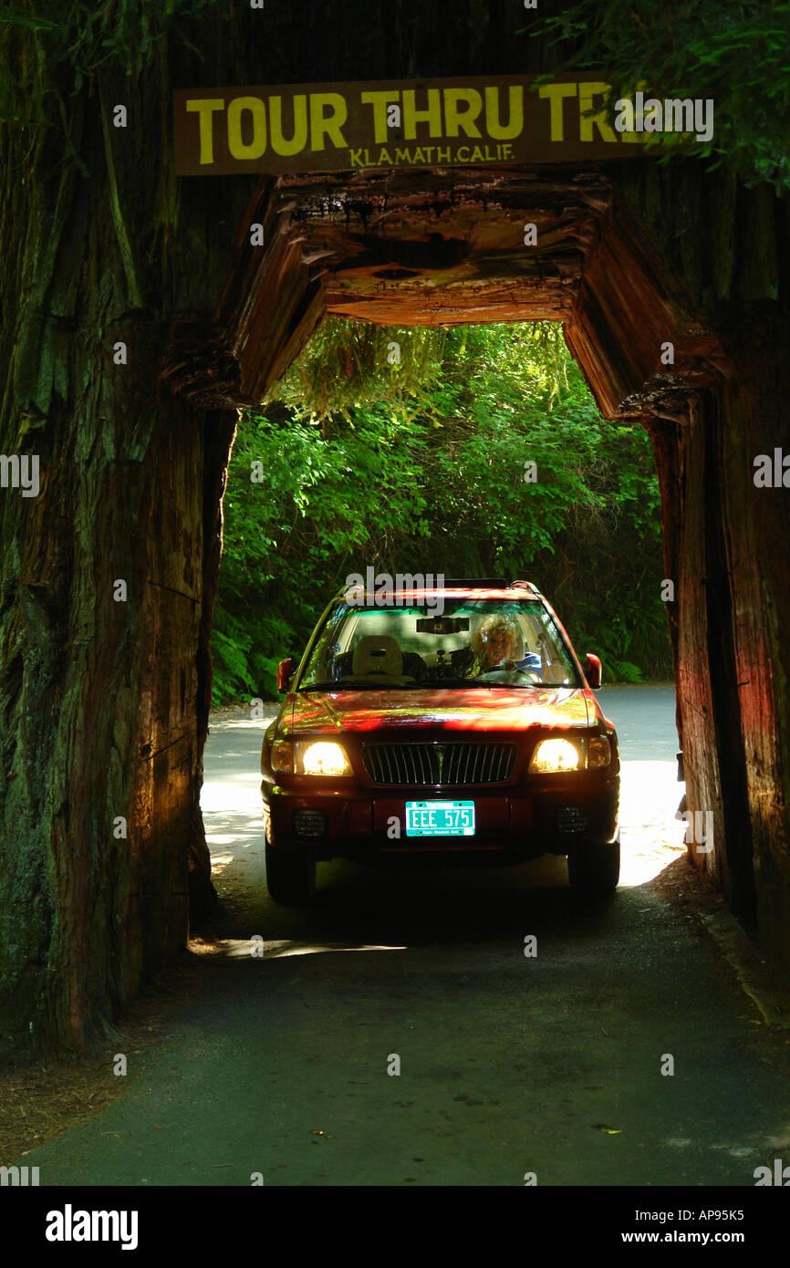 AJD51317, Klamath, CA, California, Tour Thru Tree, Redwood, car - Stock Image