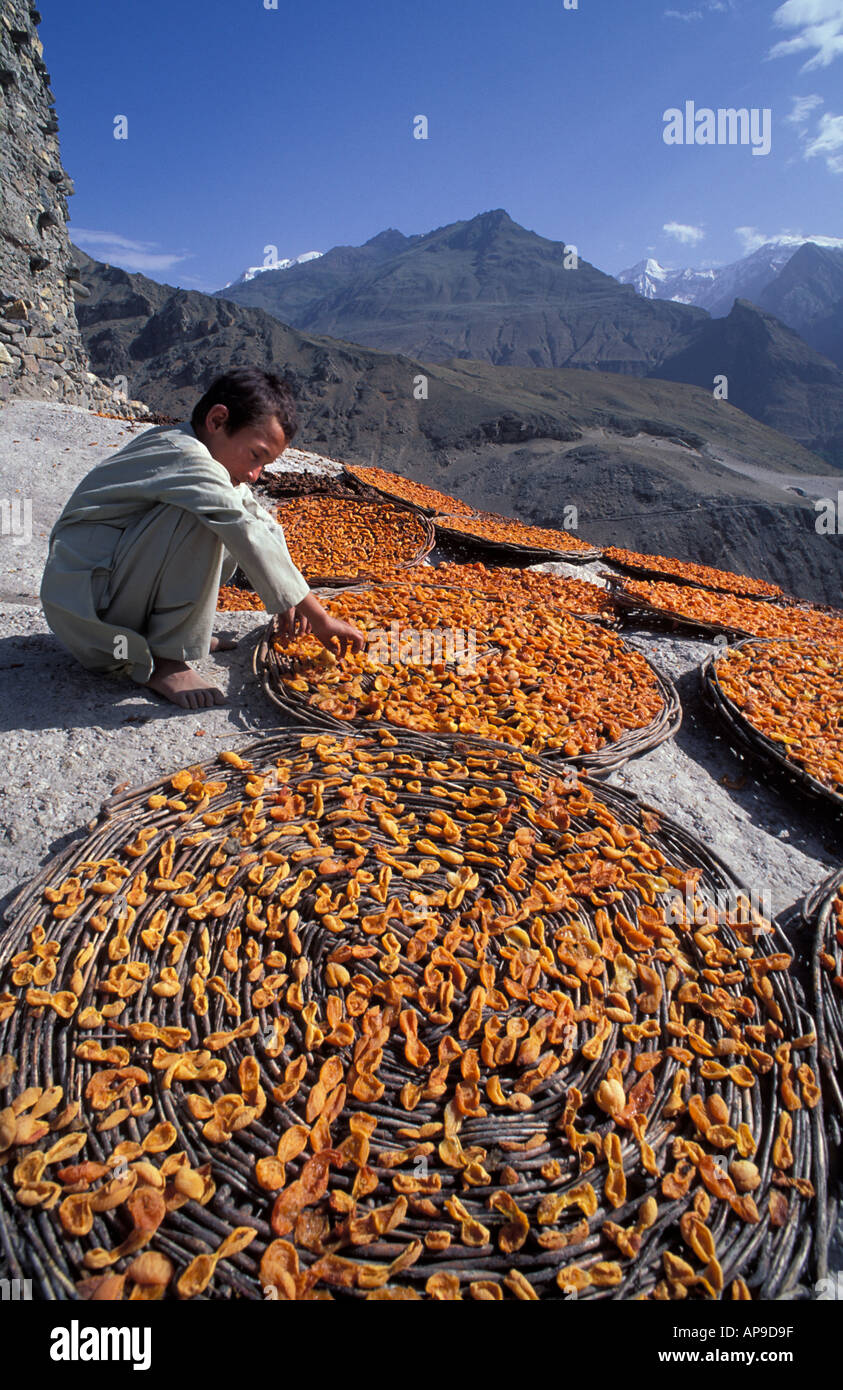 Apricots laid outin flat baskets to dry in the baking Himalayan sun Karimabad Karakoram Mountains Pakistan - Stock Image