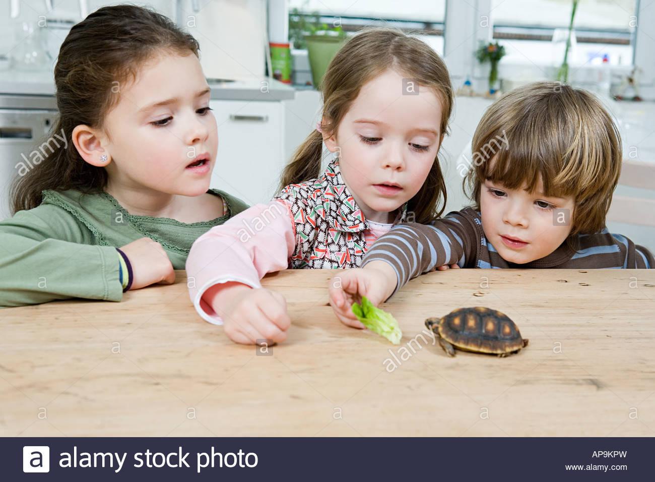 Children feeding a tortoise - Stock Image