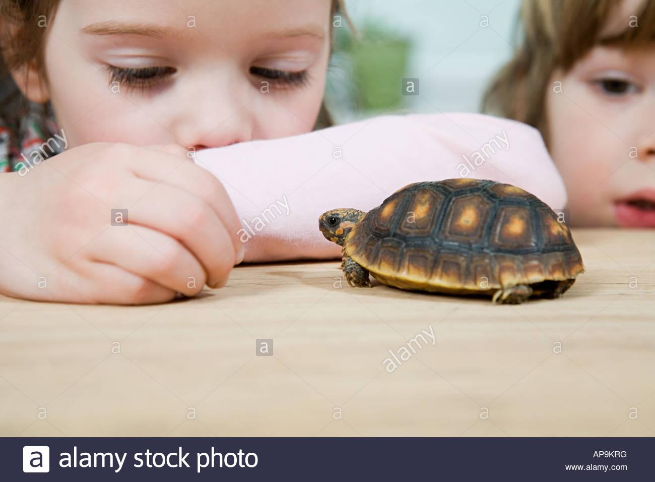 A girl feeding a tortoise - Stock Image