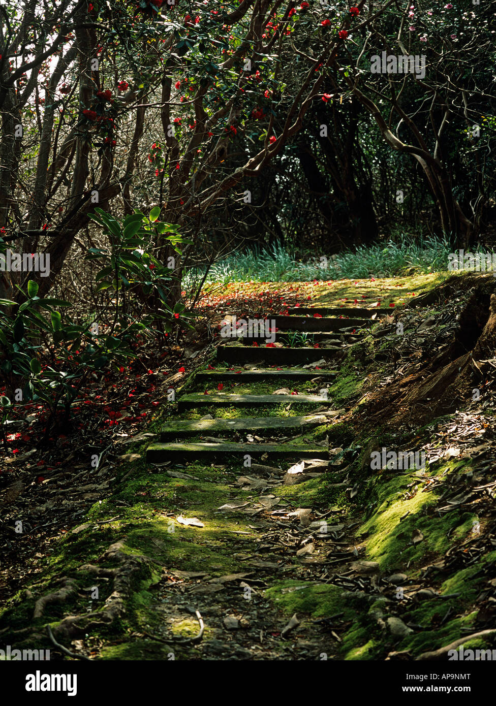 Path with steps in shade Stock Photo
