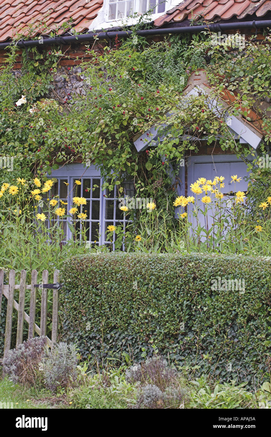 Country cottage with summer flowers in cottage garden UK - Stock Image
