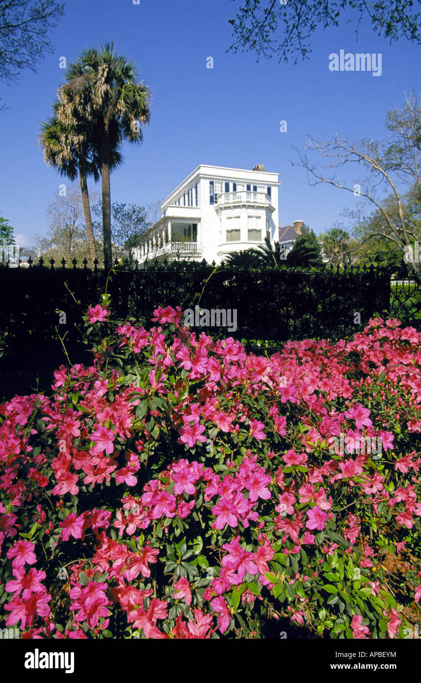 A view of the azeala gardens at a large mansion in the historic district of Charleston - Stock Image
