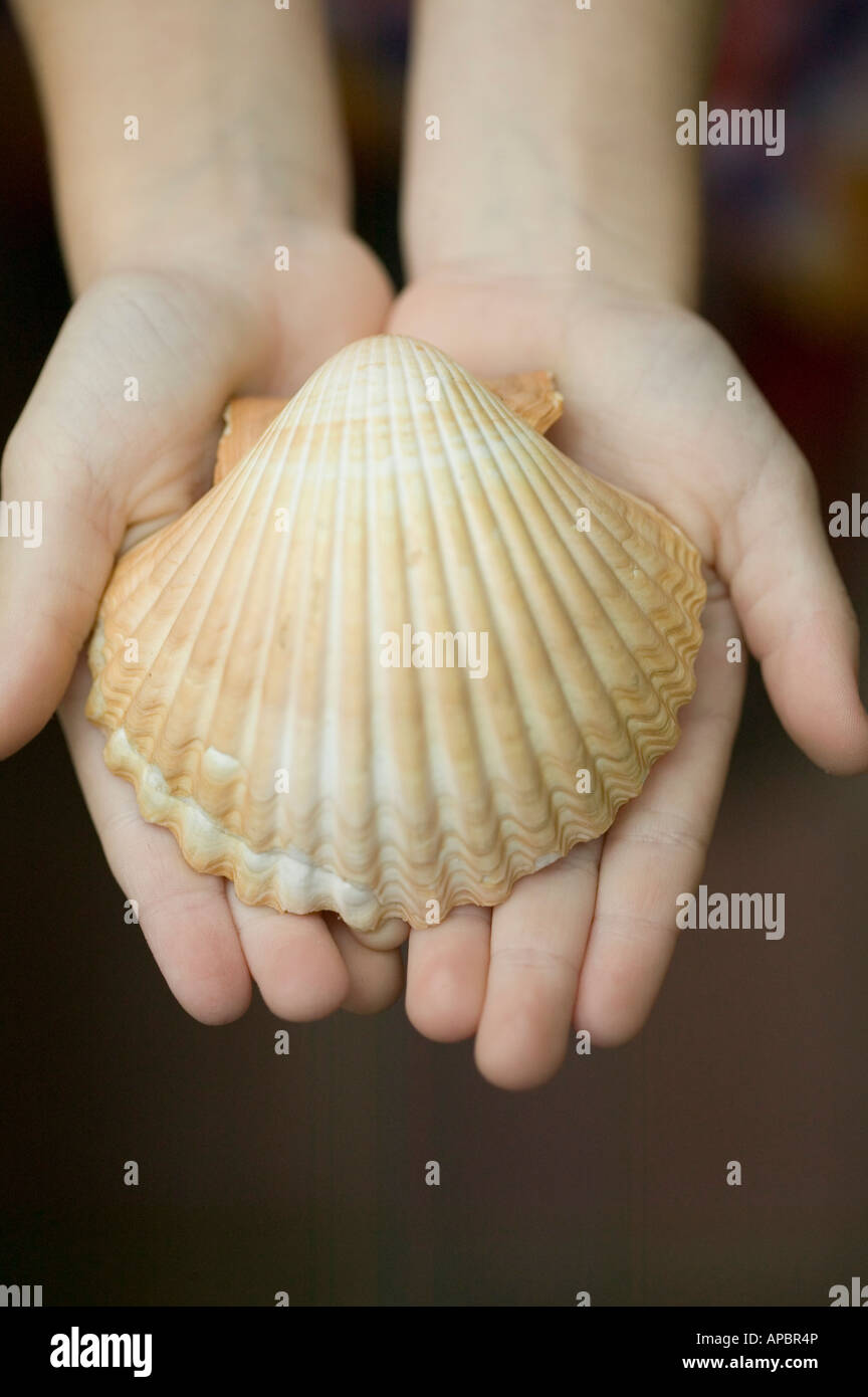 young child holds large sea shell scallop shell in hands - Stock Image
