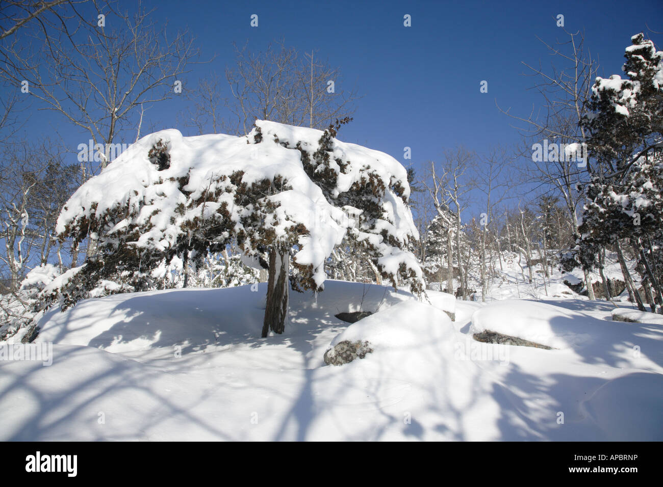 Pawtuckaway State Park during the winter months Located in Nottingham New Hampshire USA which is part of New England Stock Photo