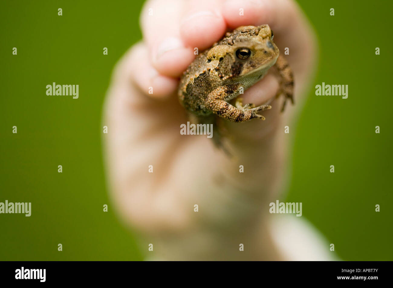 child holds frog or toad in her hand - Stock Image