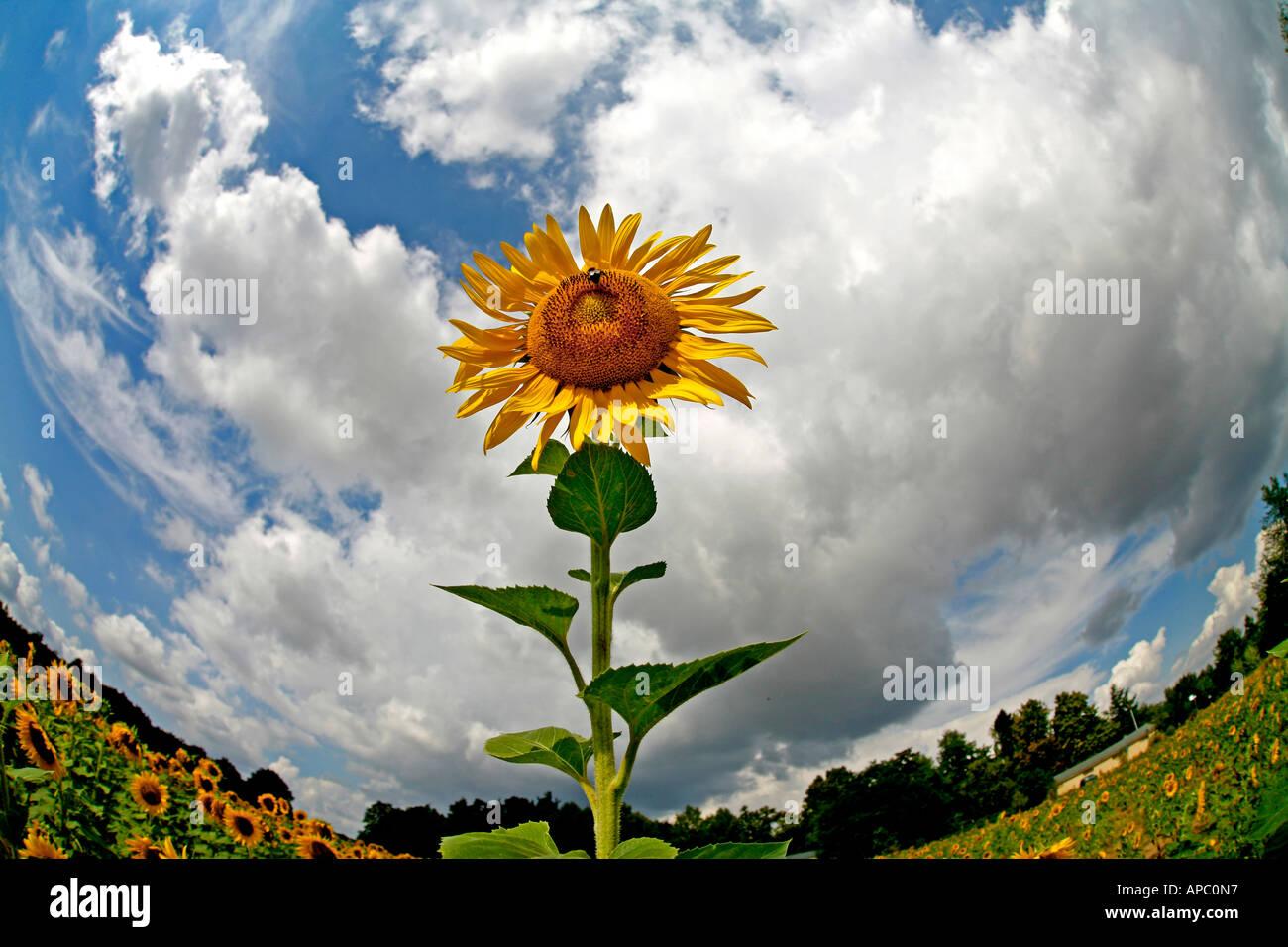 Contorsion Stock Photos & Contorsion Stock Images - Alamy