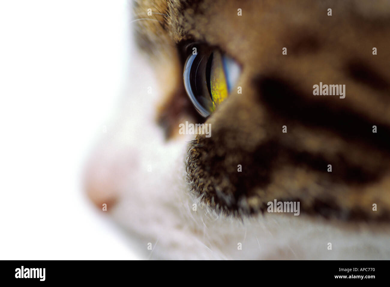Wide eyed cat profile closeup - Stock Image