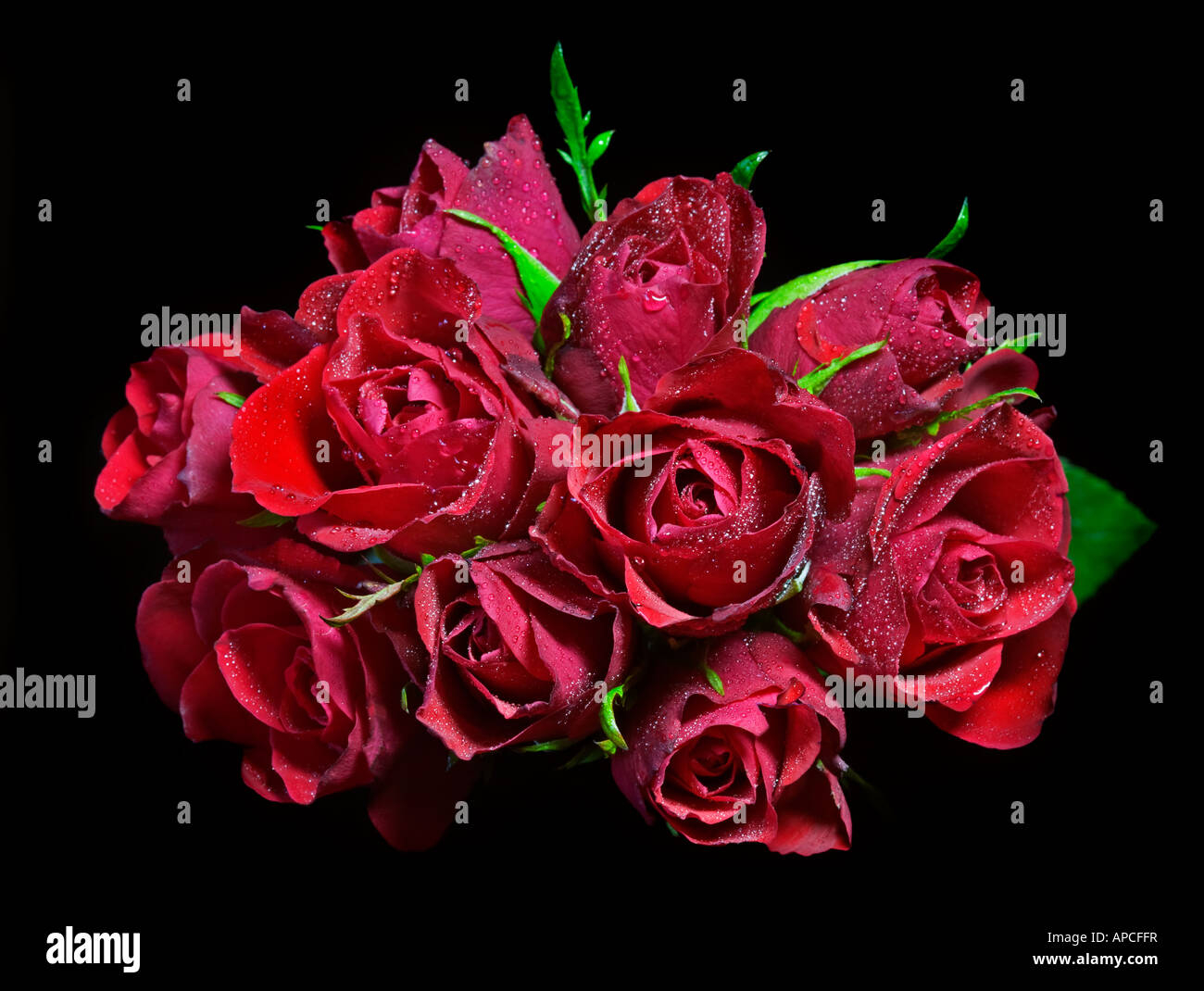 Posey of Red Roses - Stock Image