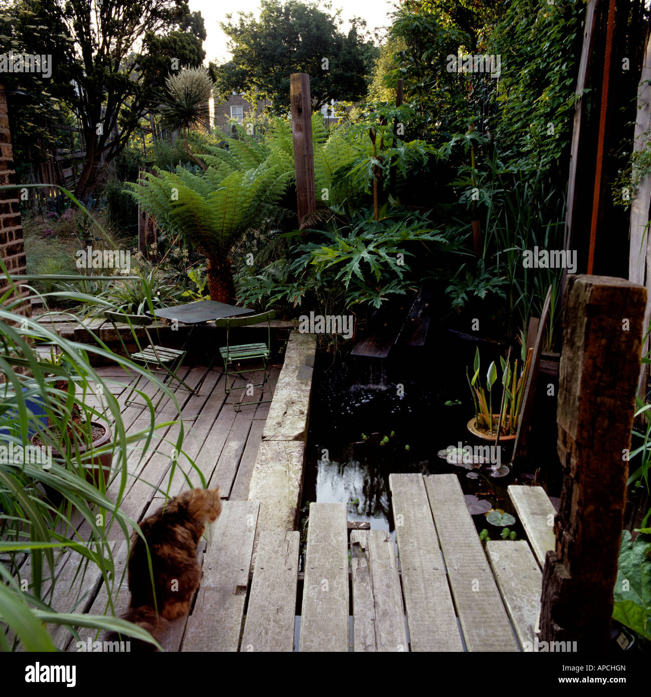London garden with wooden decking, planted with yucca and low growing New Zealand grasses - Stock Image