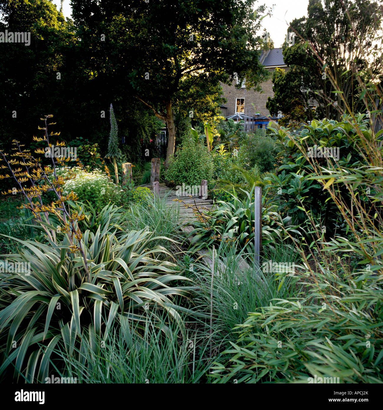 London garden planted with yucca and low growing New Zealand grasses - Stock Image