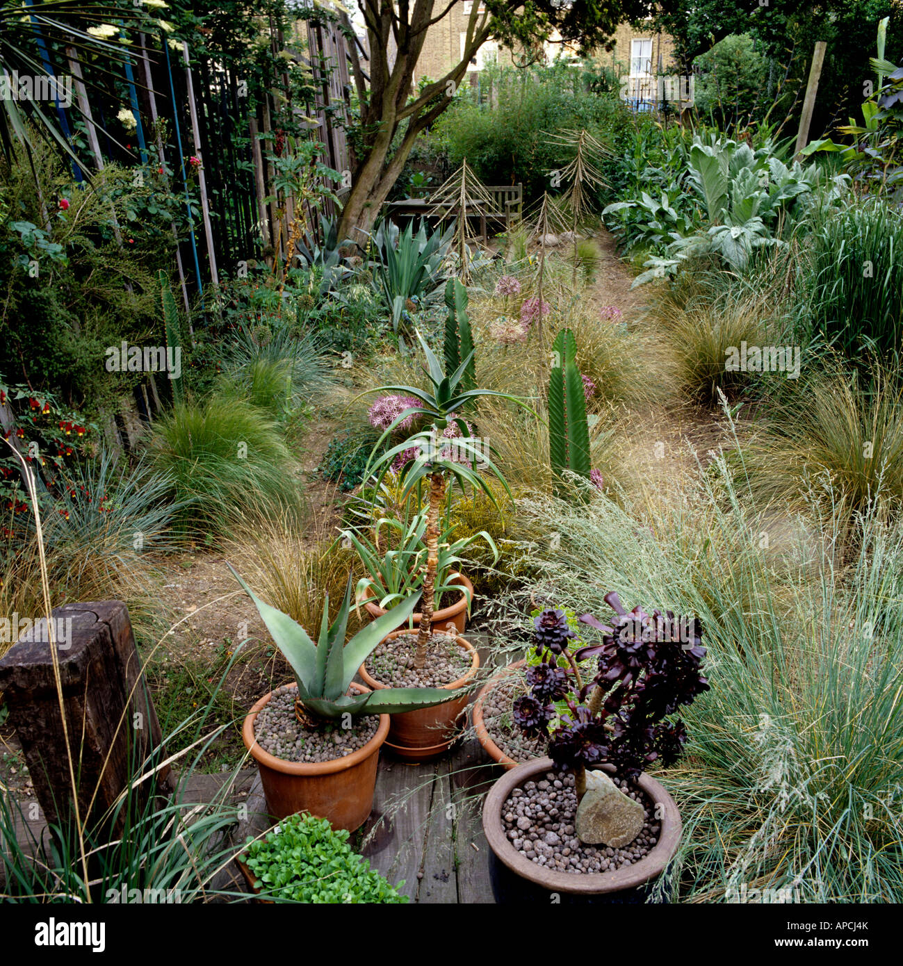 Assortment of low growing New Zealand grasses and yucca plants in London garden - Stock Image