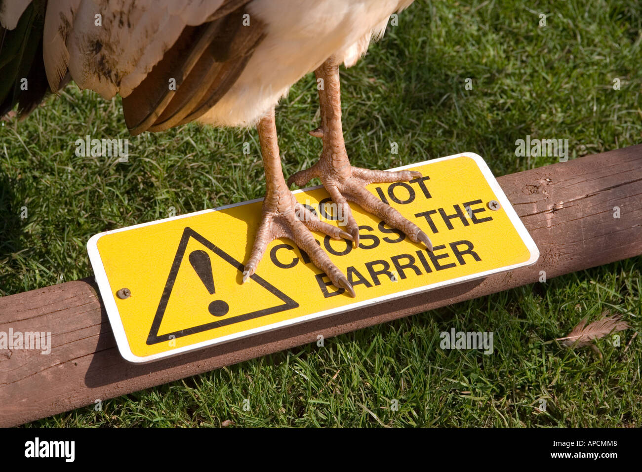 Birds feet crossing a 'do not cross barrier' - Stock Image