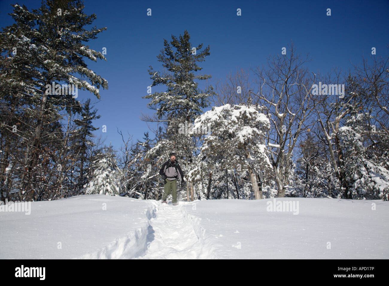 Snowshoeing in forest Stock Photo