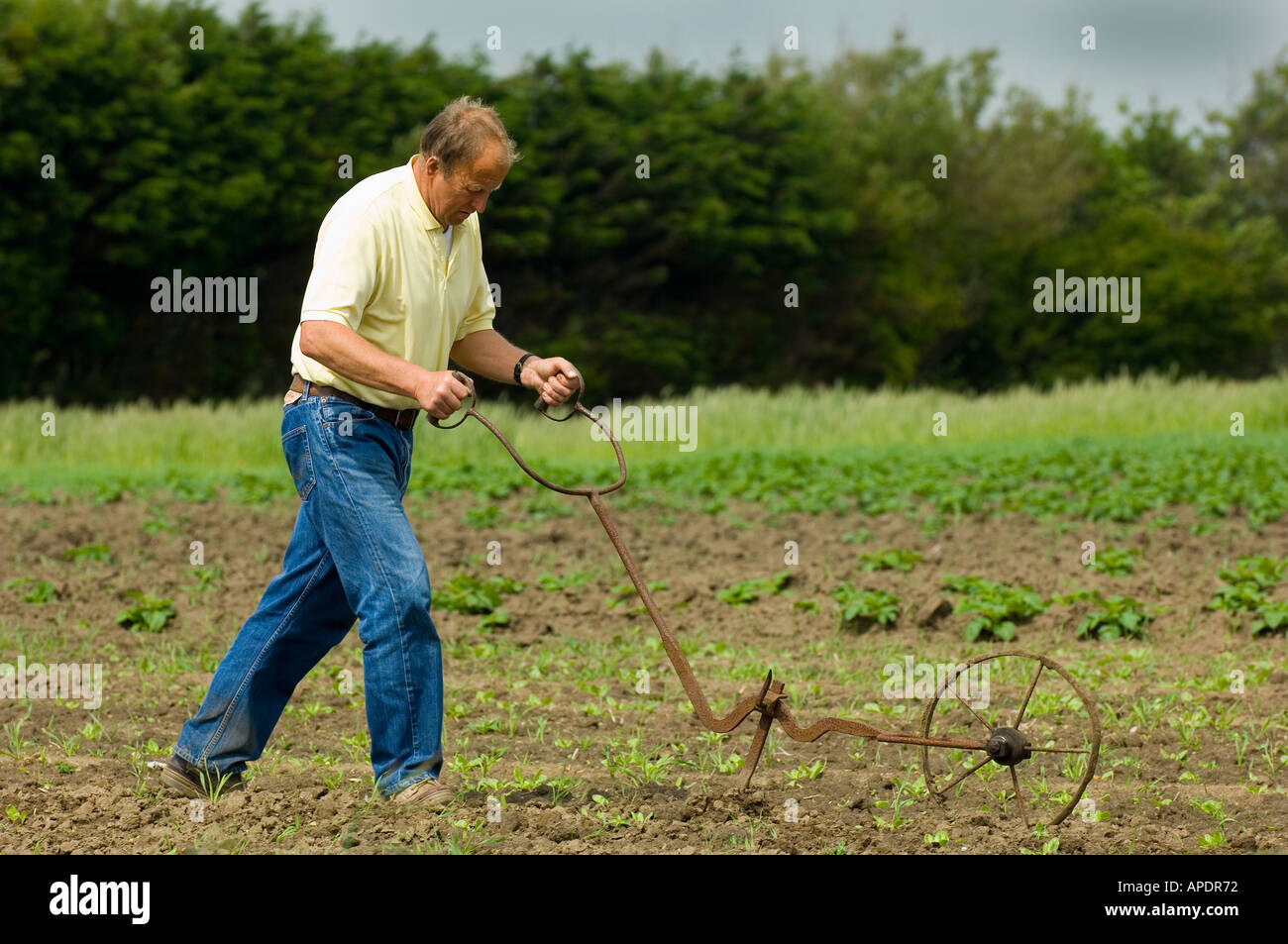 Man tilling the land by hand in Pas de Calais Picardy France Stock Photo