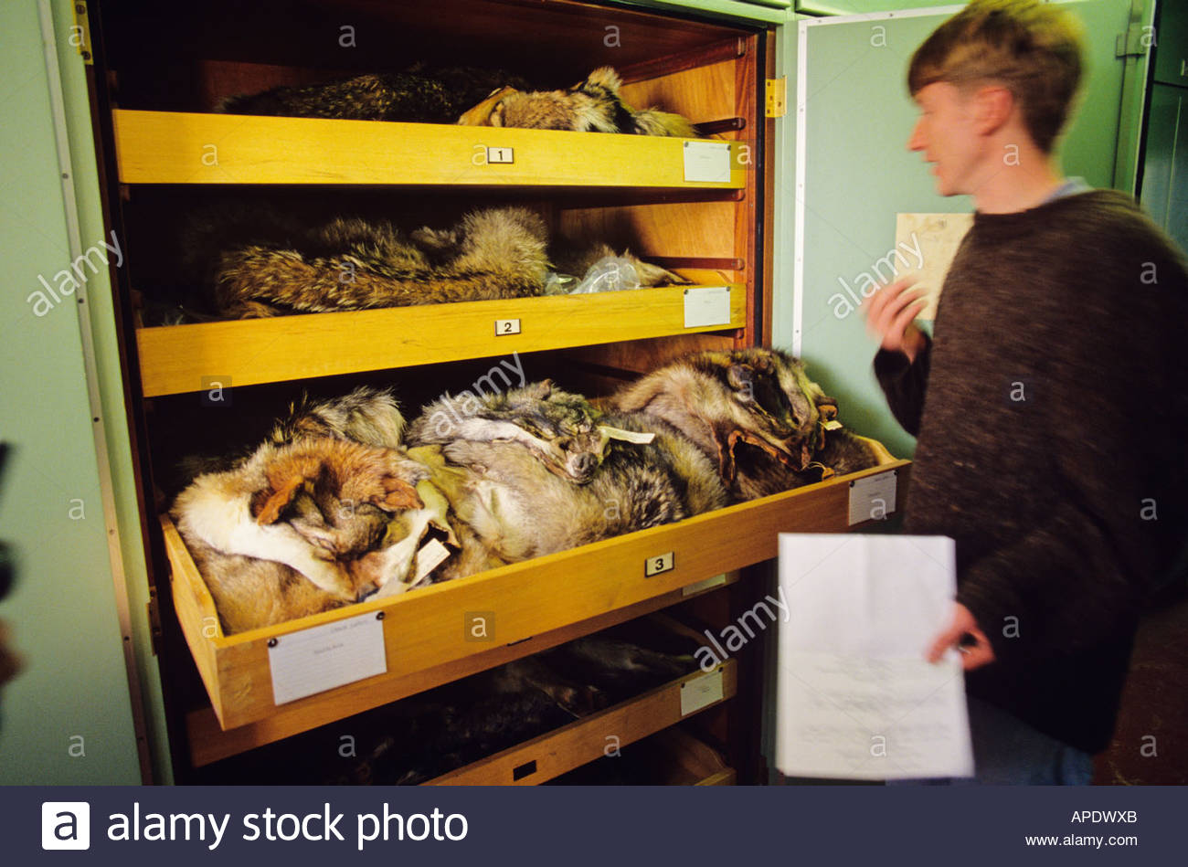 Natural History Museum, London: staff with specimens - Stock Image