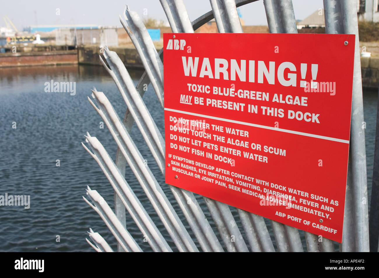 Warning sign for toxic blue green algae in Cardiff Bay docks Cardiff South Wales UK - Stock Image