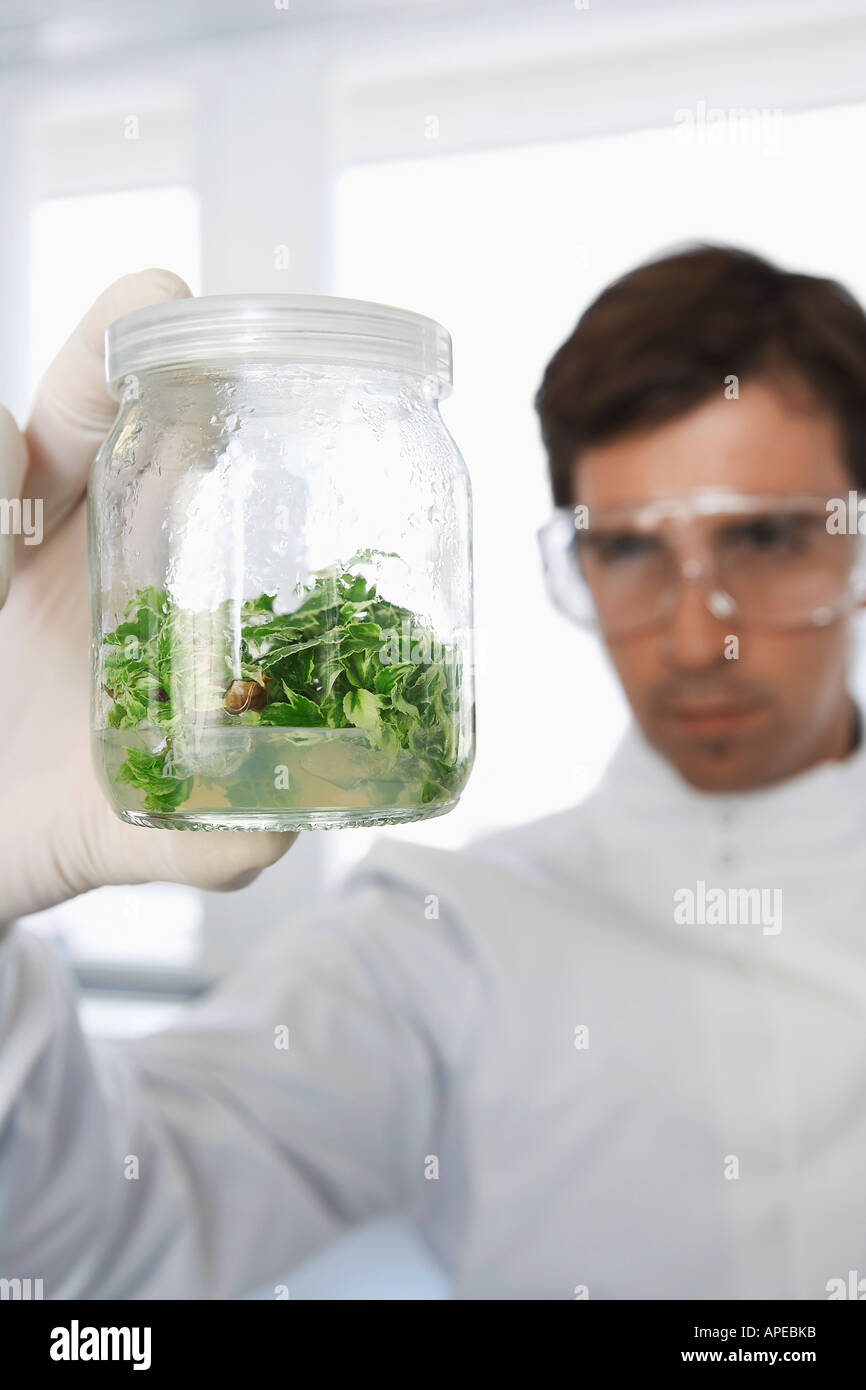 Male lab worker examining glass jar of plant material - Stock Image