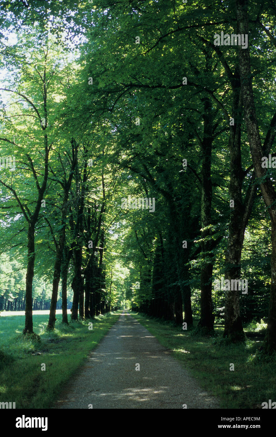 A tree lined path leads to Mad King Ludwig's palace in Bavaria. - Stock Image