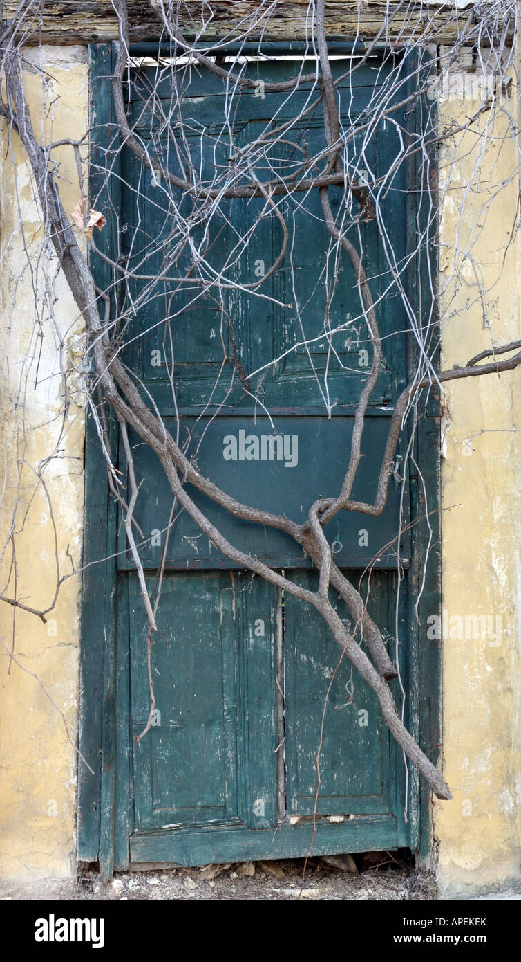 Antique door sealed by roots - Stock Image