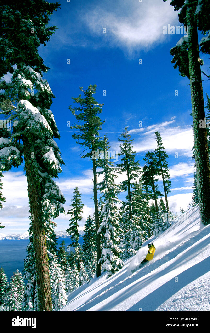 Offpiste snowboarder on slope in mountain woodland, Richard Stretch, Homewood, Tahoe Stock Photo