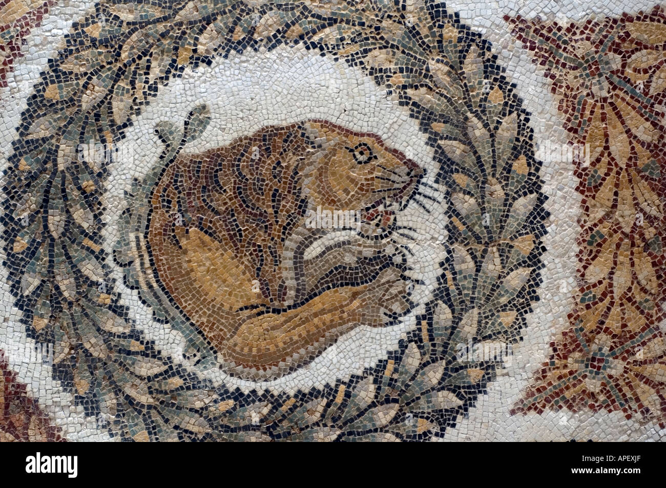 Art works in the museum of Bardo, in Tunis, Tunisia. Here is a a close-up photo of a Roman  mosaic showing a lion. Stock Photo