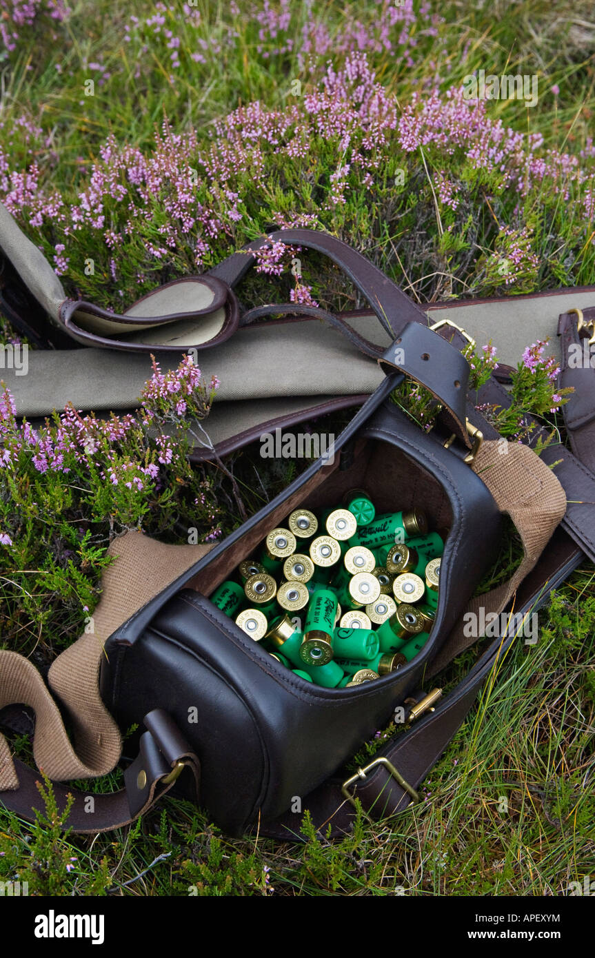 Leather Cartridge Bag Filled with 12 Gauge Shotgun Shells and Gun Cases Sitting in Heather - Stock Image