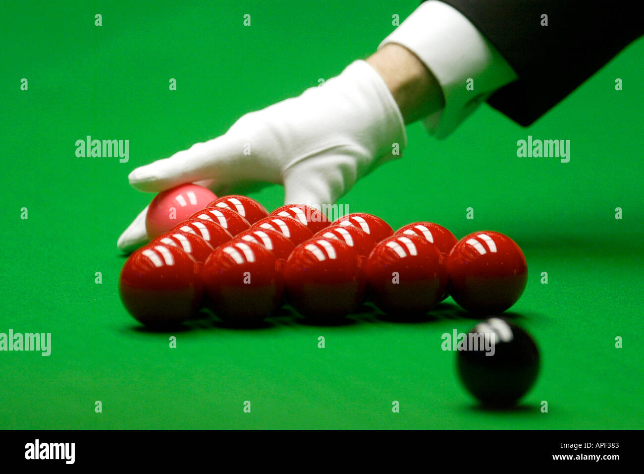 Snooker referees gloved hand positions pink ball in front of the red pack - Stock Image