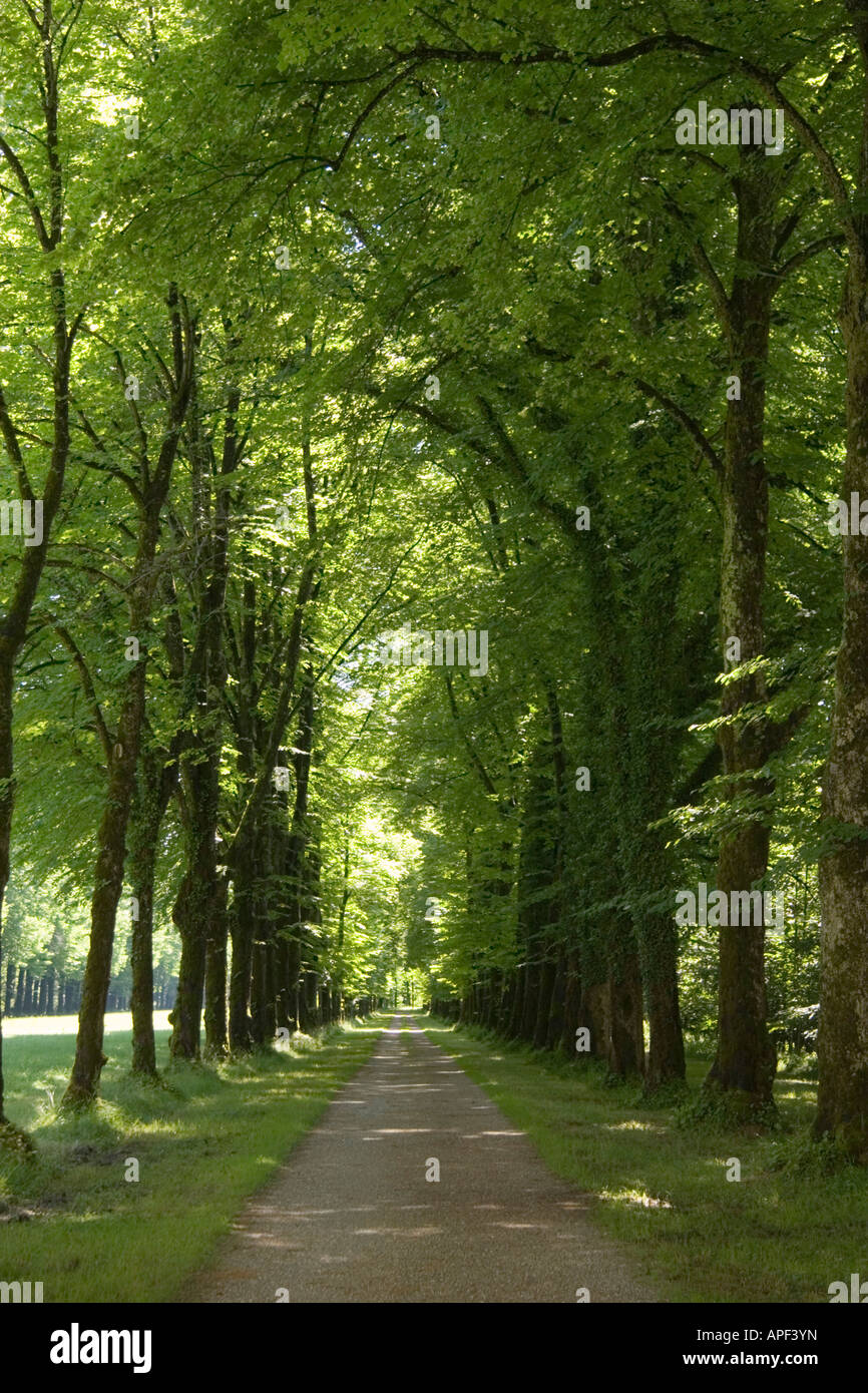 A tree lined road. - Stock Image