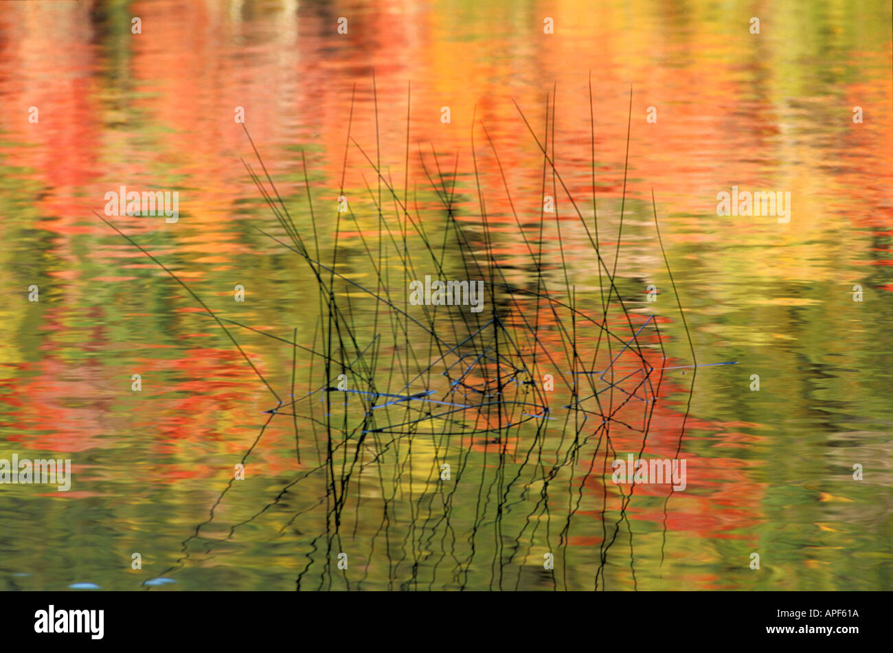 Fall forest colors reflect on Bubble Pond Acadia National Park Bar Harbor Maine Stock Photo