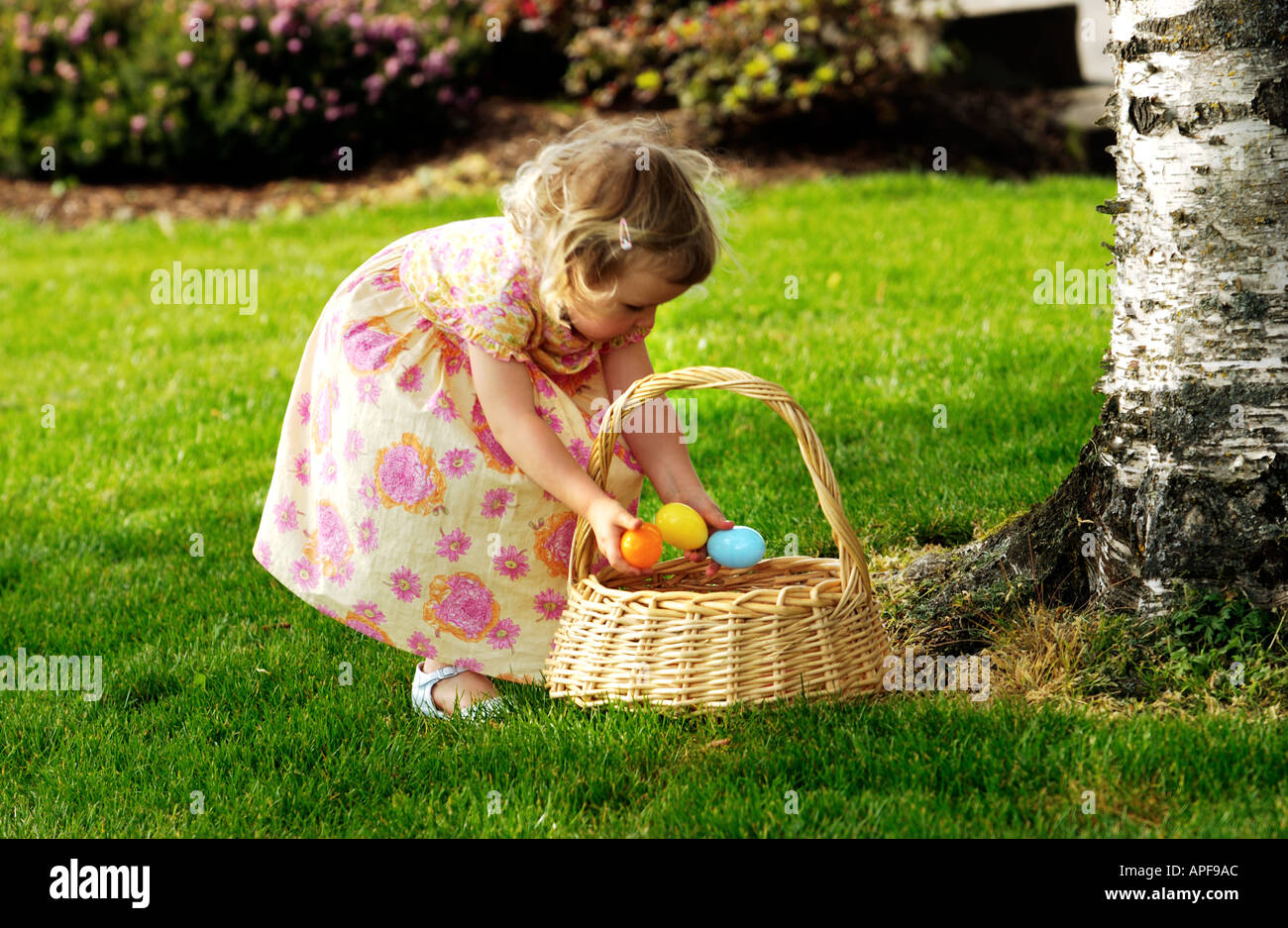 Two year old girl putting easter eggs into basket - Stock Image