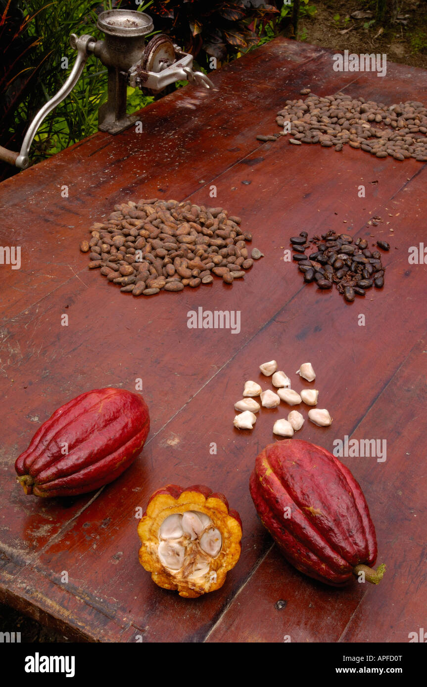 Stages of chocolate production Stock Photo