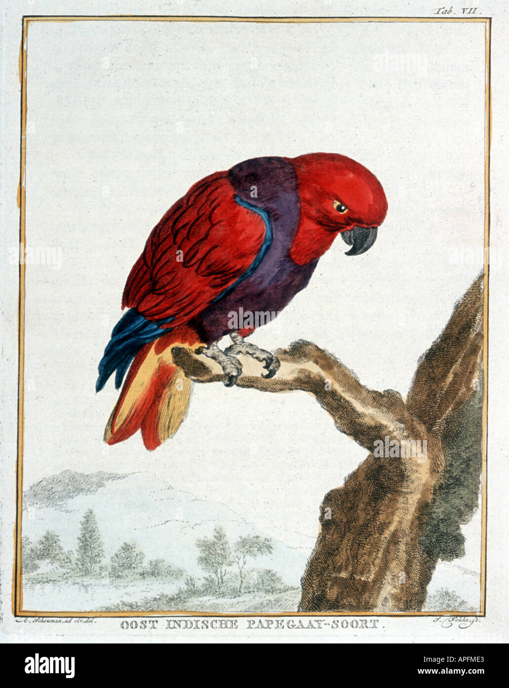 Vosmaer Collection of rare animals quadrupeds birds and serpents from Eastern and Western India - Stock Image