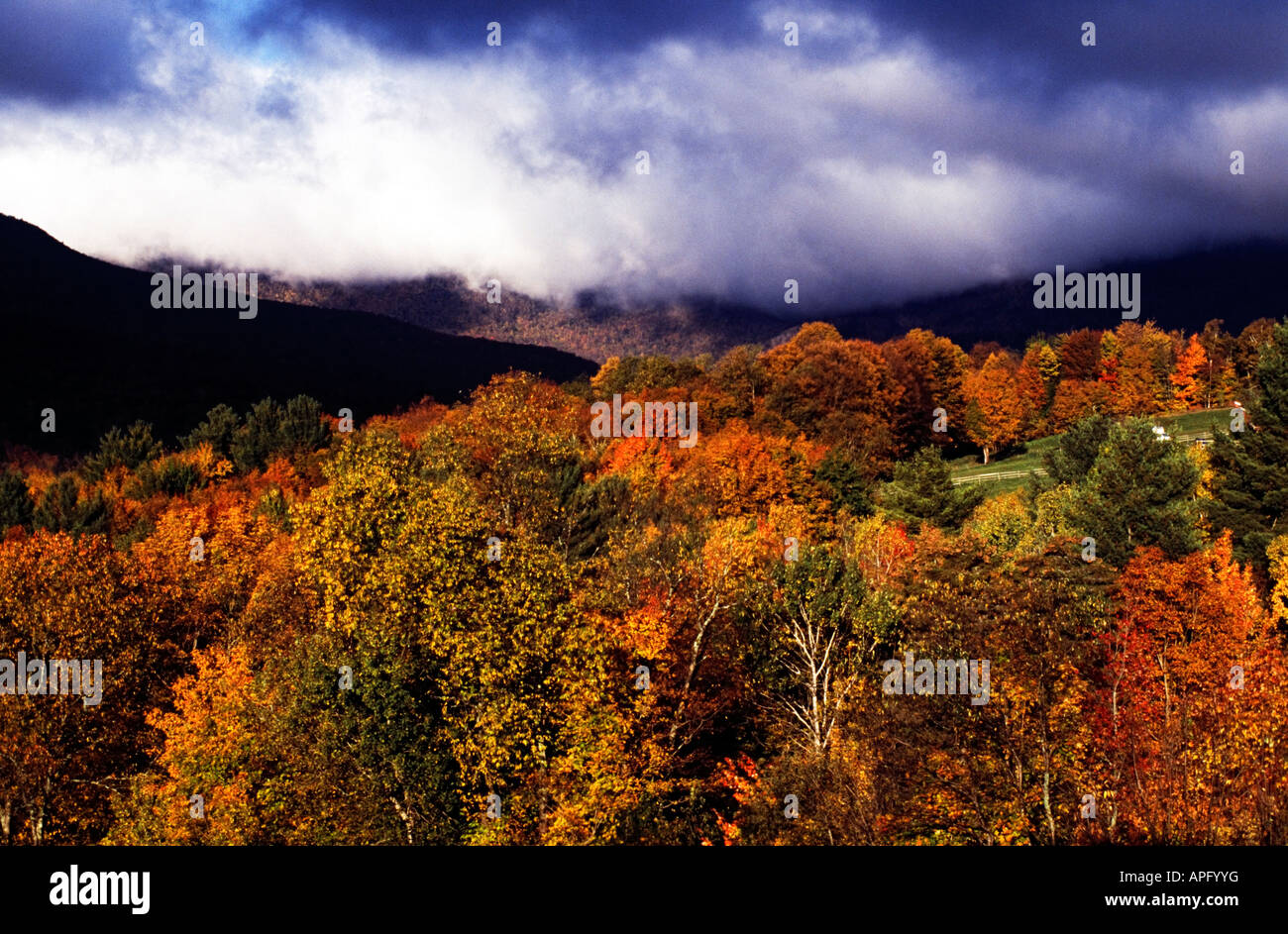 View of autumn colored trees in Stowe, Vermont, New England, USA - Stock Image