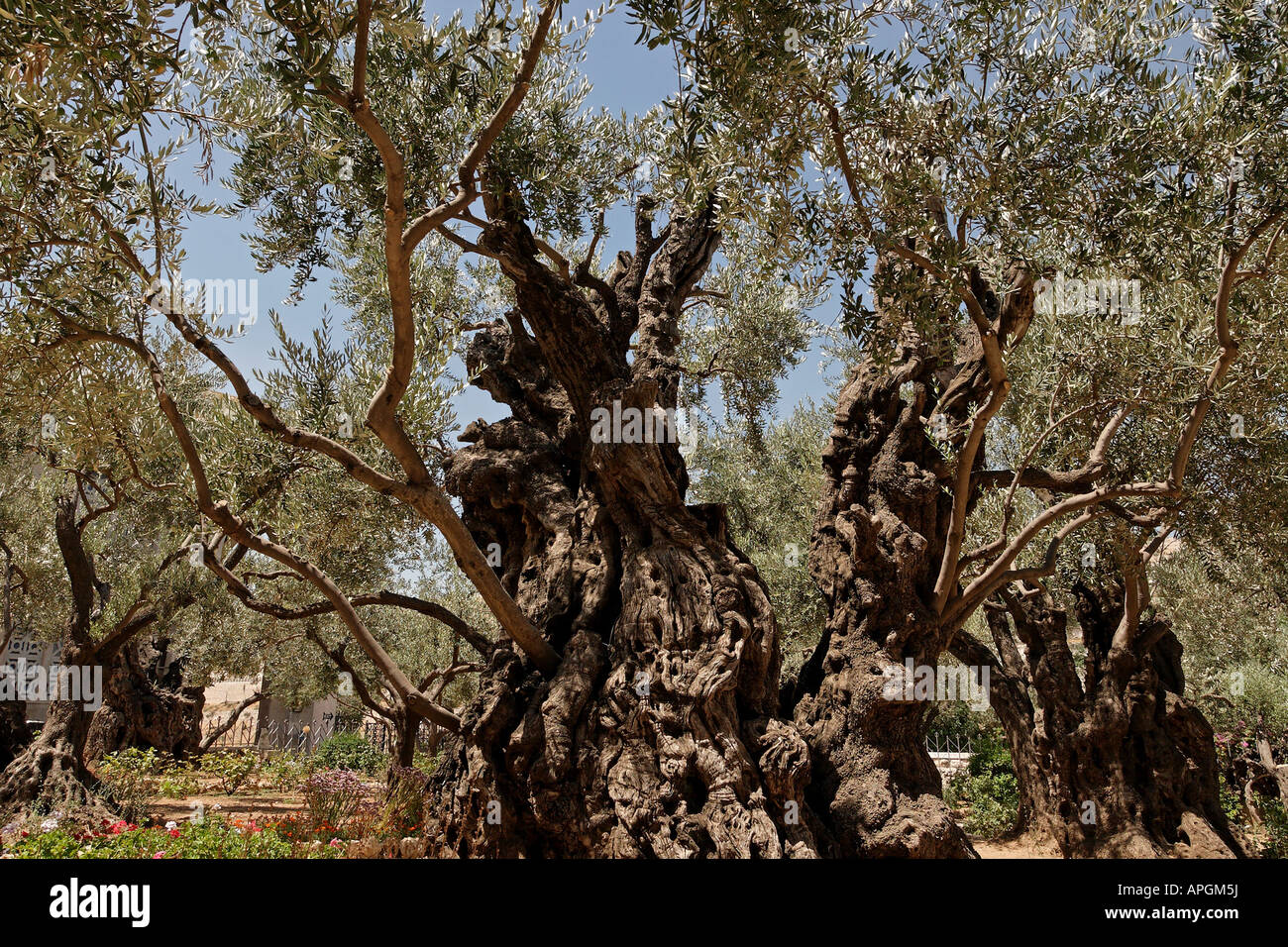 Garden Gethsemane Stock Photos & Garden Gethsemane Stock Images - Alamy