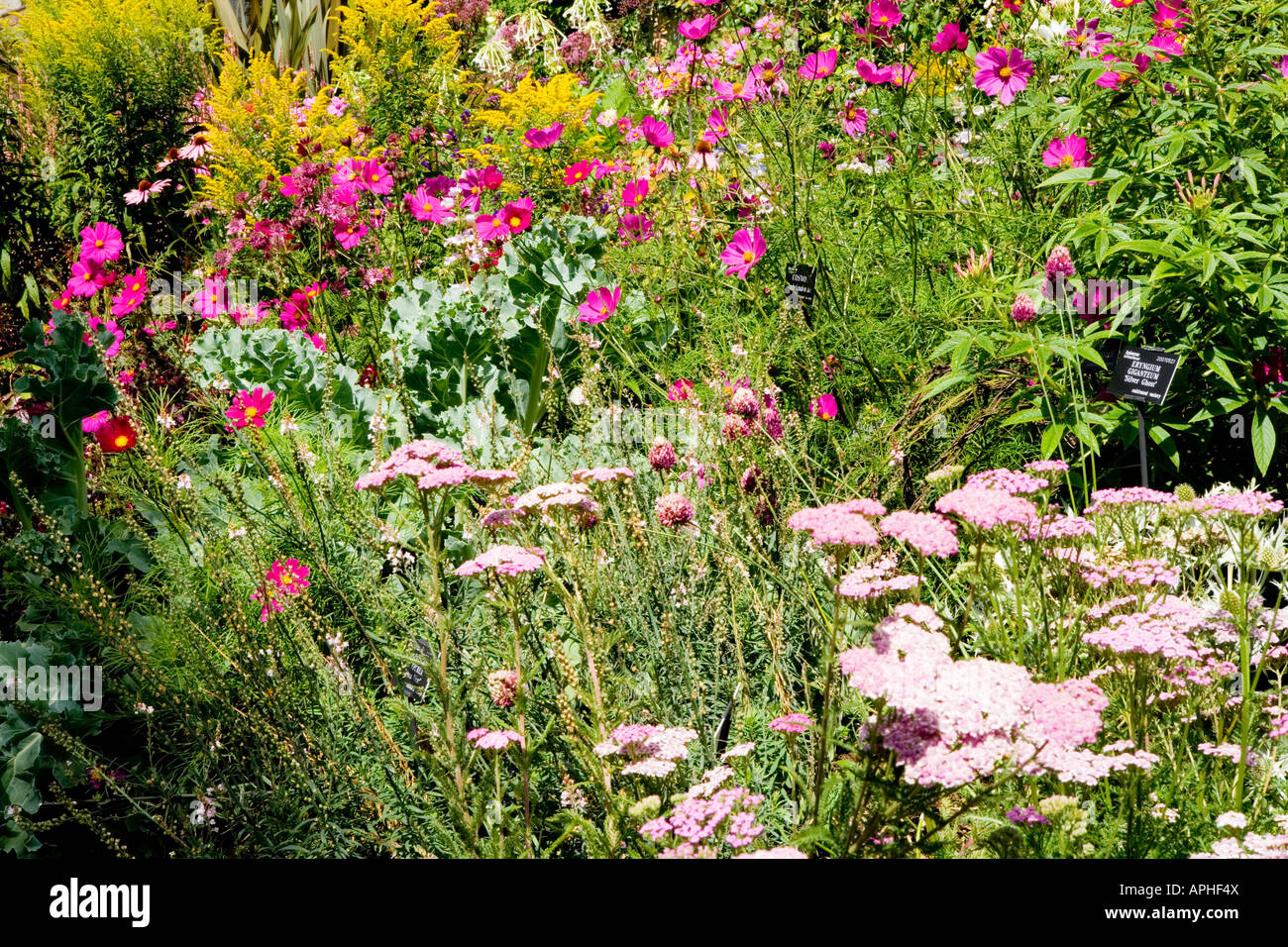 Summer border of annuals and herbaceous perennials with yarrow stock summer border of annuals and herbaceous perennials with yarrow achillea millefolium lilac beauty in the foreground and cosmos izmirmasajfo