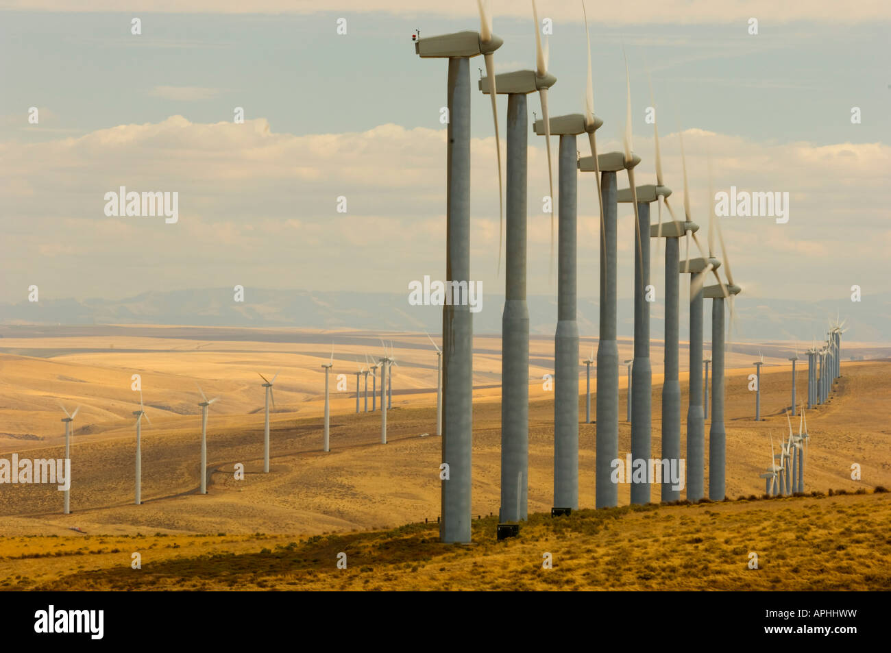 Wind turbines dot the rolling hills of a windfarm in southeastern Washington State Stock Photo