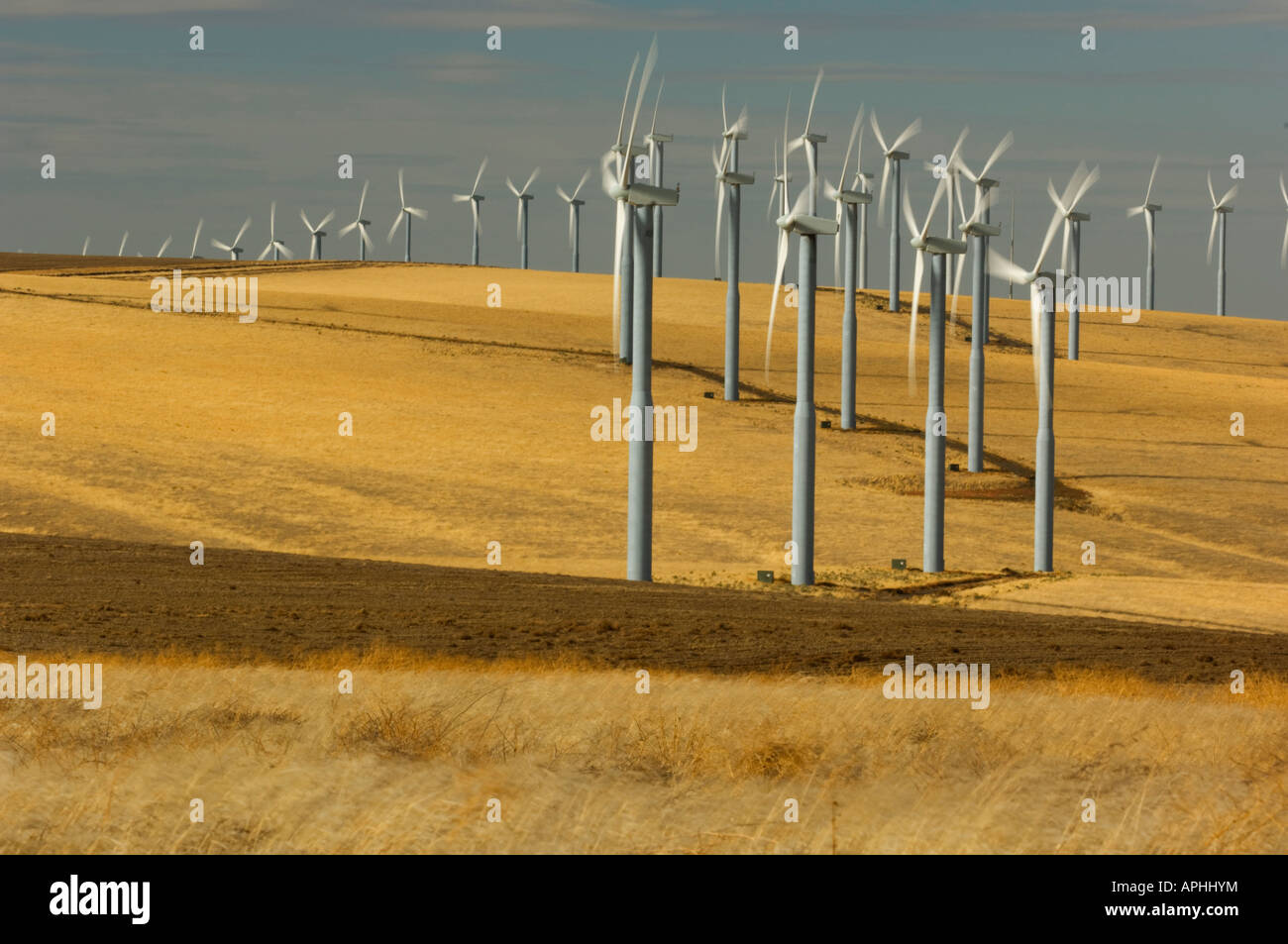 Lines of wind turbines with their propellers spinning follow the contours of rolling hills in southeastern Washington - Stock Image