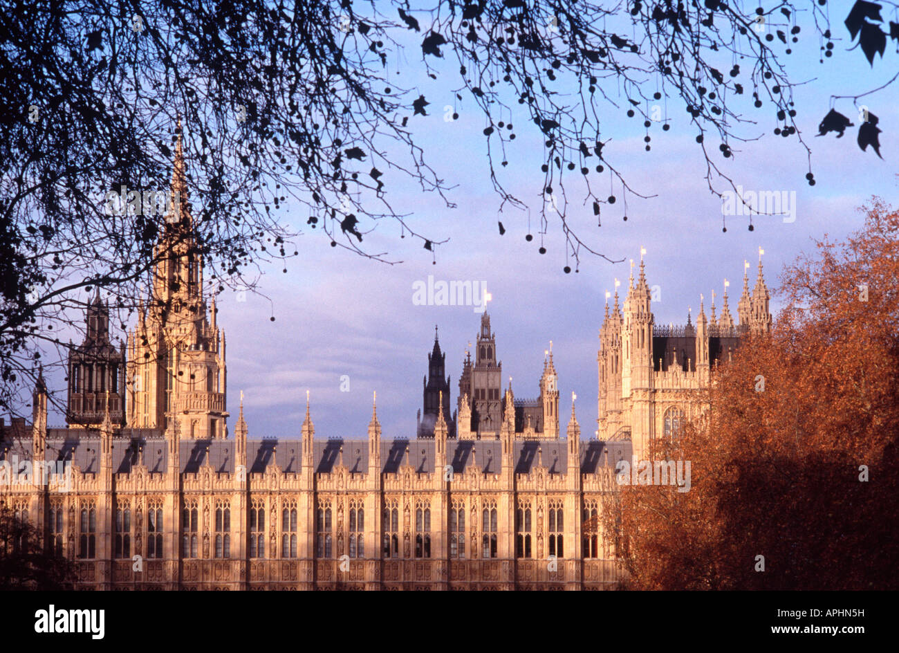 Houses of Parliament viewed through branches of London plane tree from Victoria Tower Gardens, Westminster, London - Stock Image