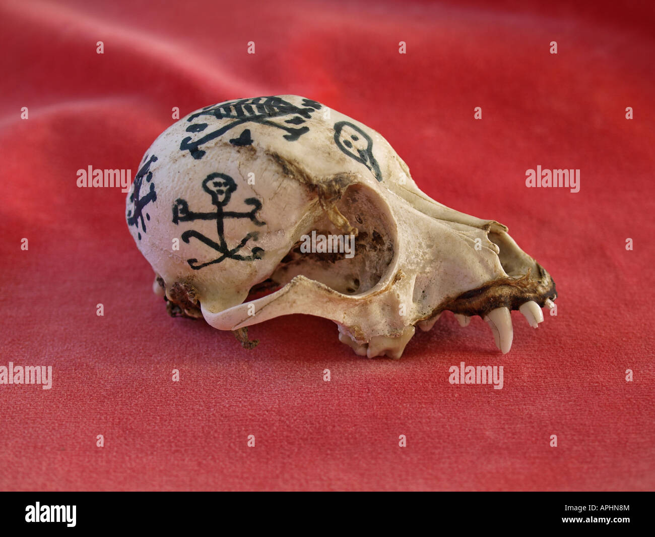 The skull of a dog with the Veve Design used in Voodoo to summon the various Loa or spirit deities - Stock Image