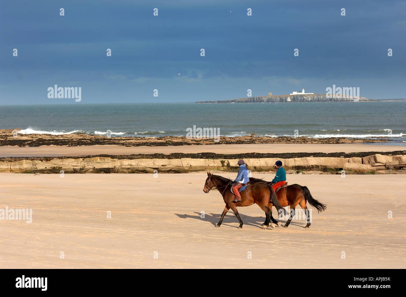 Pony Trekking on beach near Seahouses Northumberland England - Stock Image