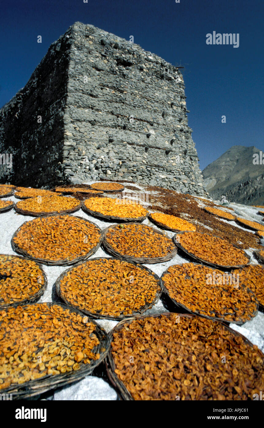 Sunbaked Apricots Apricots laid out in flat baskets to dry in the baking Himalayan sun Altit Fort Karimabad Pakistan Stock Photo