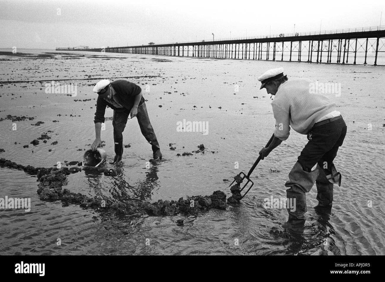 Fishermen digging for Lug worms  Southend on Sea, Pier Essex. England 1974. HOMER SYKES Stock Photo
