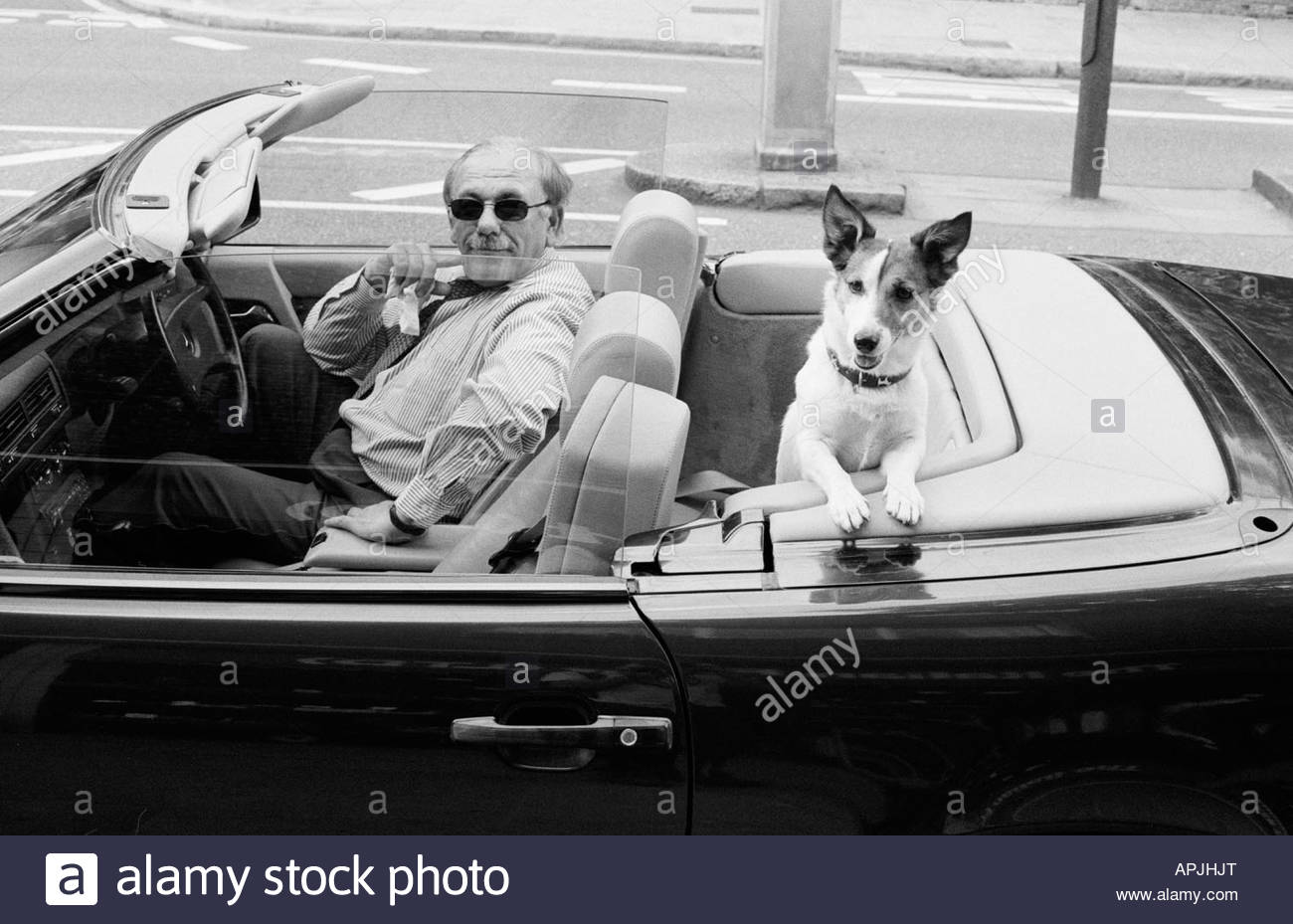 man on the kings road london in open top car with small dog stock