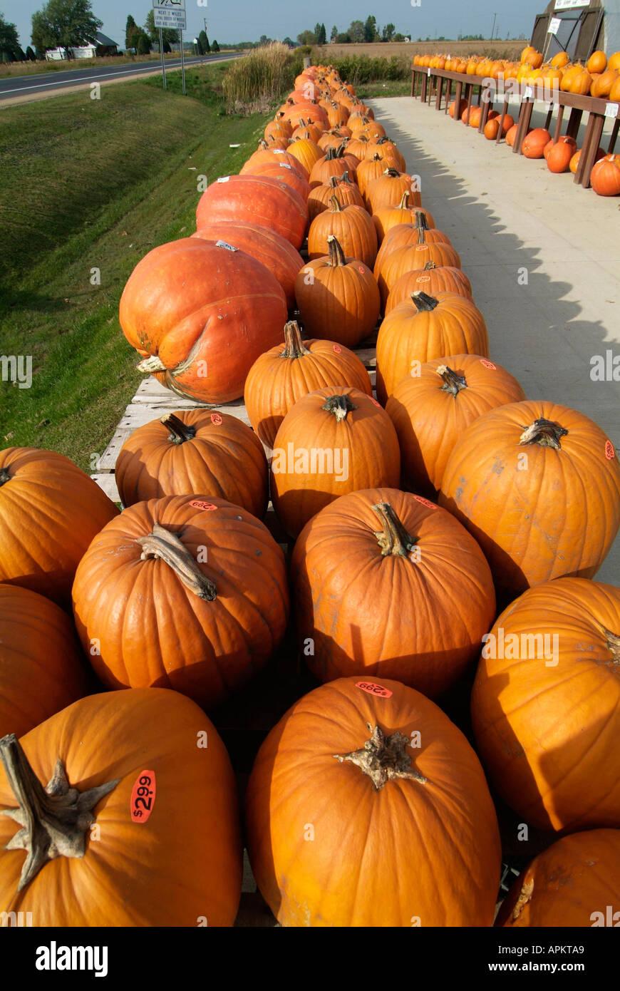 orange halloween pumpkins on display at a michigan farmers market