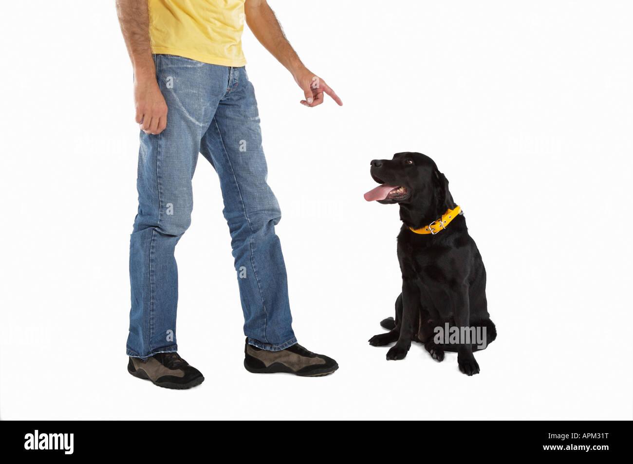 Owner educating dog - Stock Image