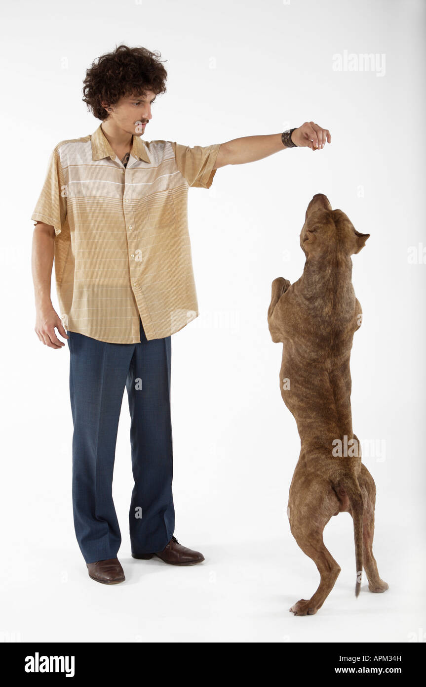 Owner awarding dog - Stock Image