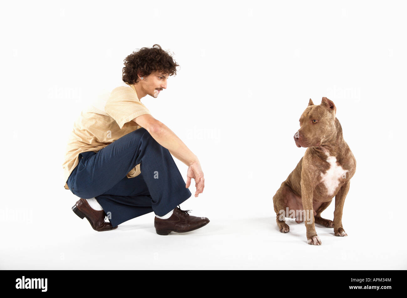 Owner with Pitbull dog - Stock Image