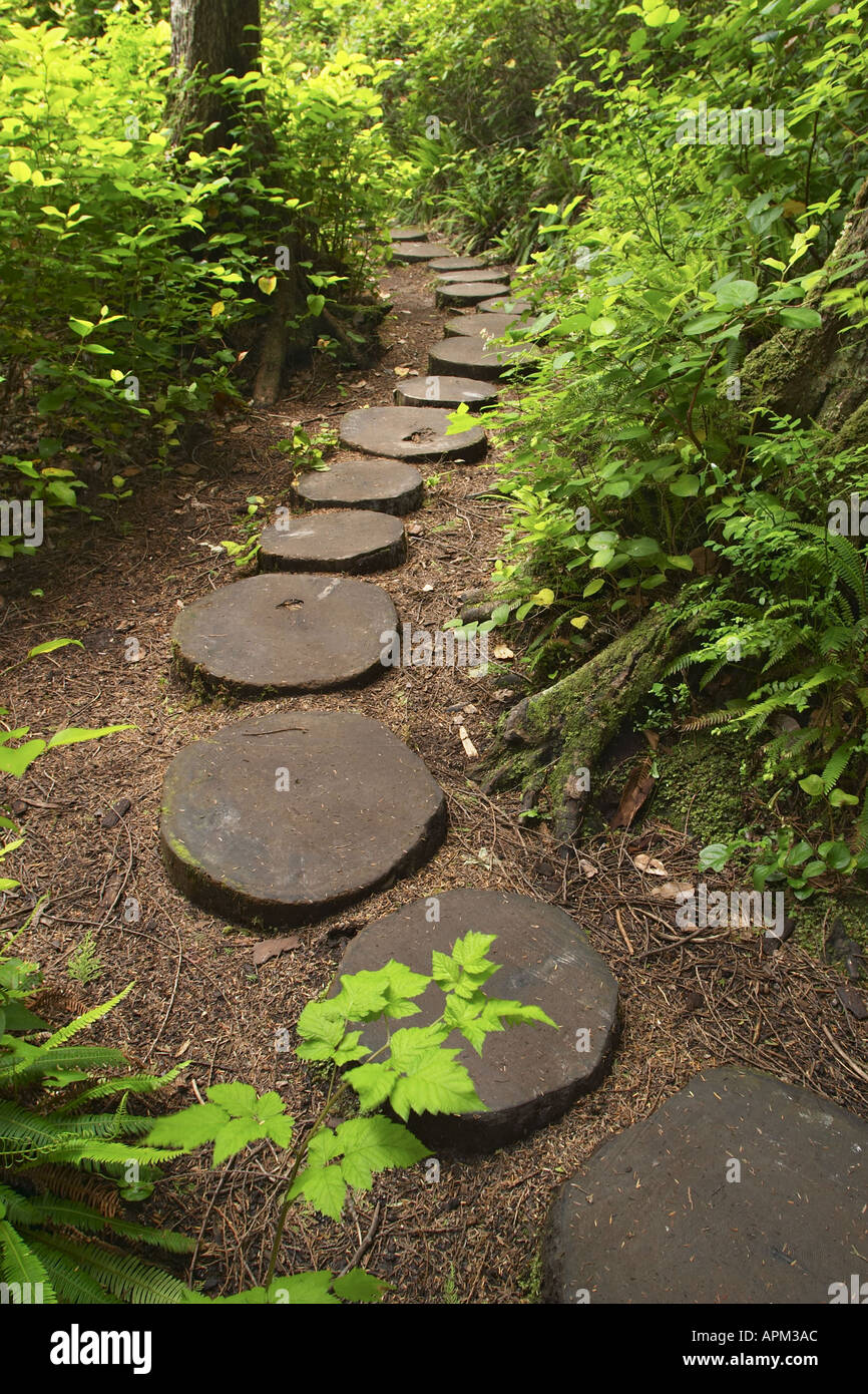 Trail through forest lined with wood stepping stones Cape Flattery ...